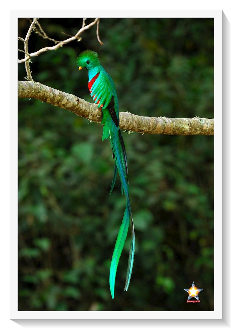 El Quetzal
