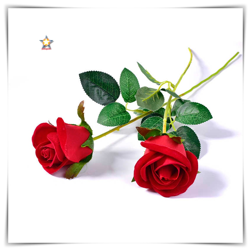 Magia de la rosa