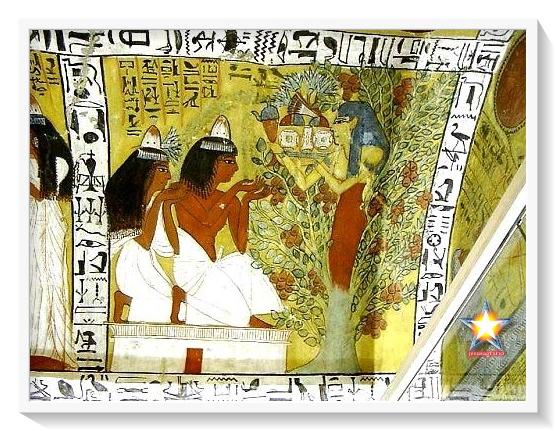 Sicomoro egipto